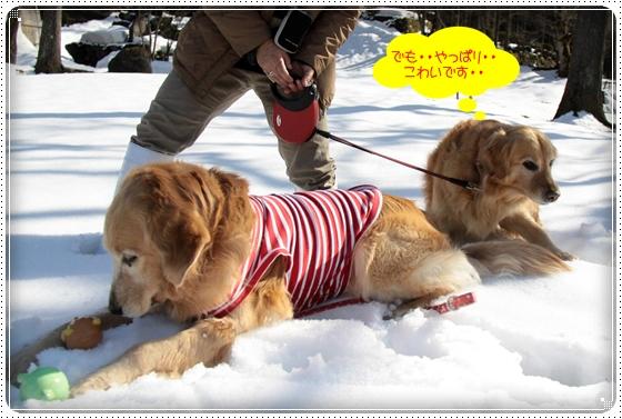 2011,3,6雪遊び6