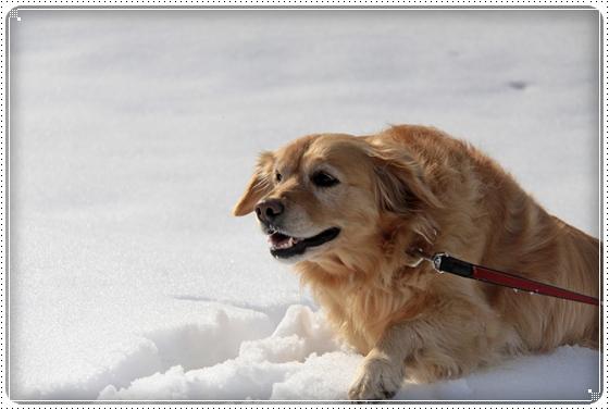 2011,3,6雪遊び8