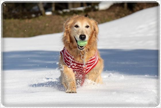 2011,3,6雪遊び13