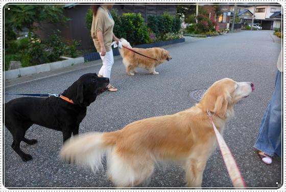 2014,9,11お散歩5