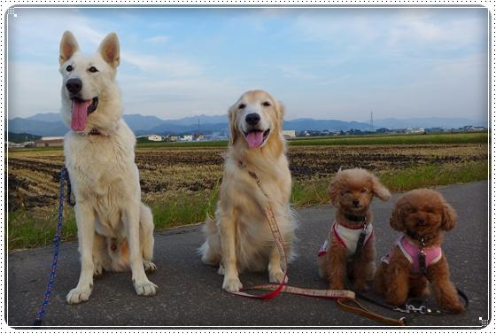 2014,9,23お散歩5