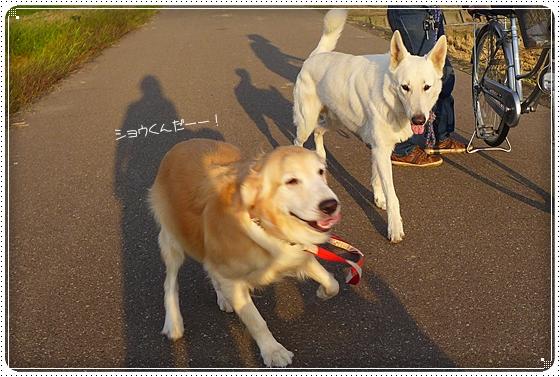 2014,9,23お散歩2