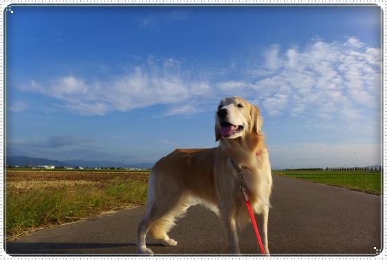 2014,9,26お散歩6