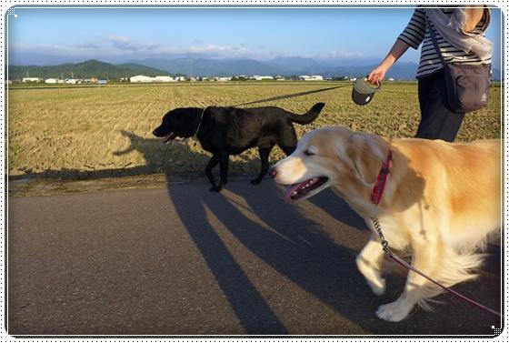 2014,10,1お散歩3
