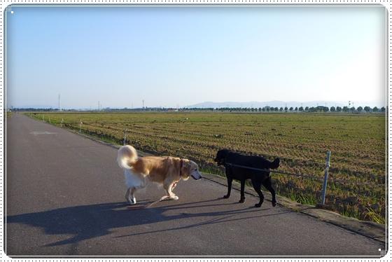 2014,10,1お散歩2