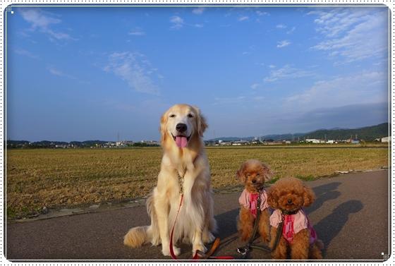 2014,10,1お散歩1