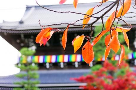 2013_kyoto_koyo_6.jpg