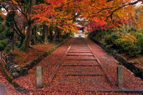 bishiyamon.jpg