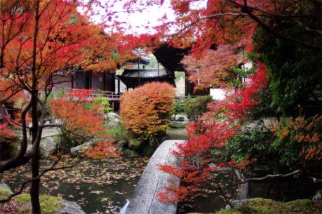 bisihiyamon5.jpg