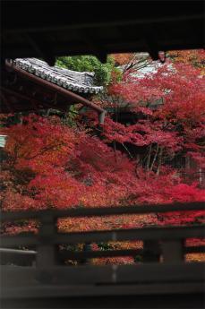 bisihiyamon6.jpg