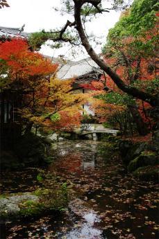 bisihiyamon7.jpg