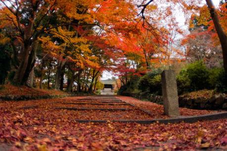 bisihiyamon8.jpg
