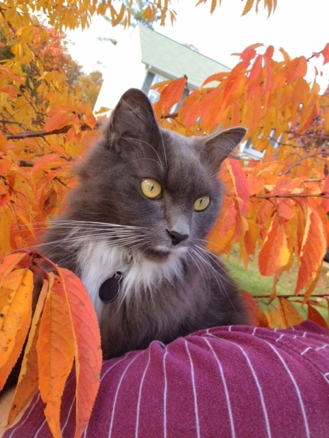 Sammy in fall color
