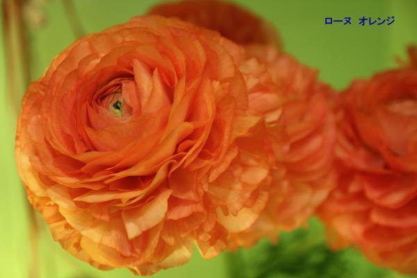021_convert_20120325082051.jpg