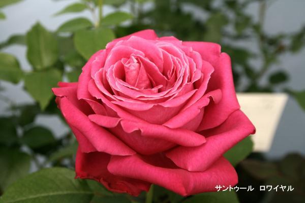 029_convert_20120513090633.jpg