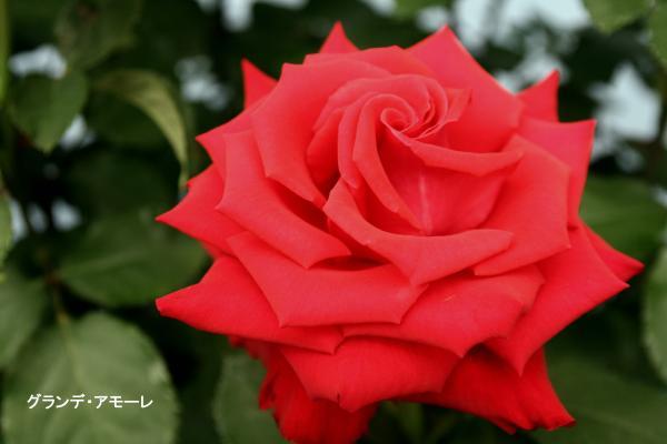 039_convert_20120513090843.jpg