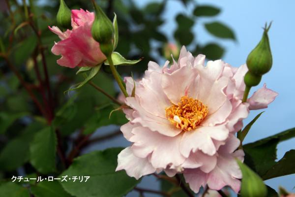 045_convert_20120513091123.jpg
