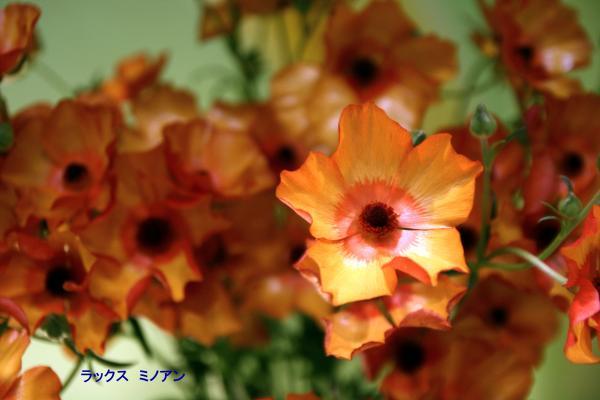 056_convert_20120325083245.jpg