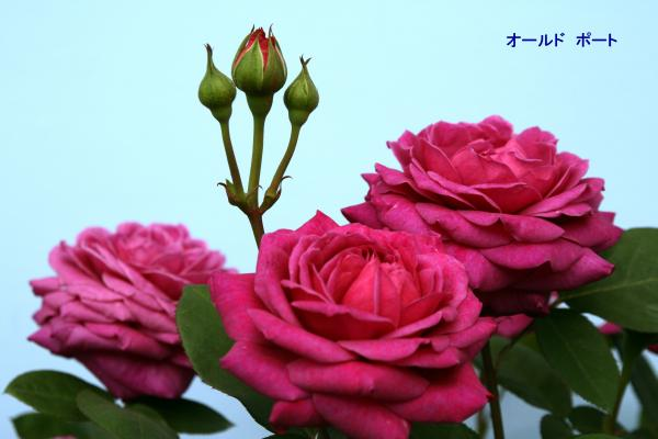 068_convert_20120513091716.jpg