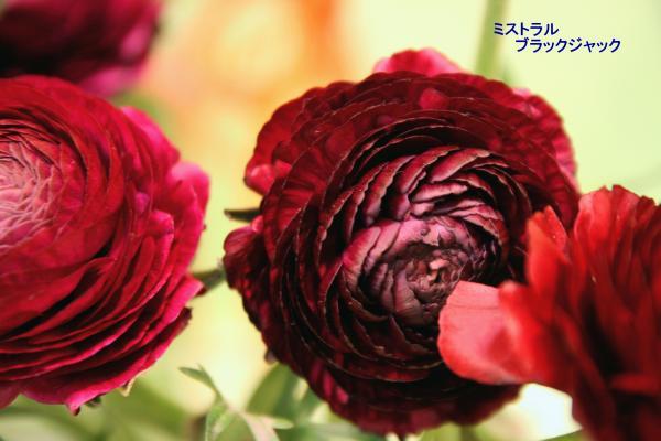 080_convert_20120325083913.jpg