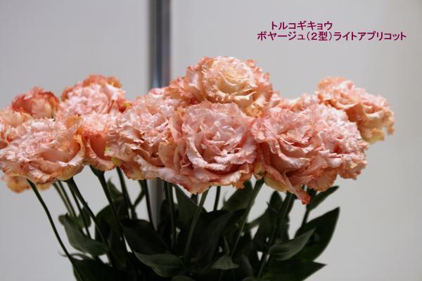 172_convert_20120325220848.jpg