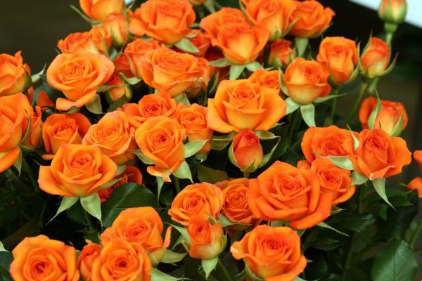 307_convert_20120514220201.jpg
