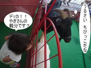 maika22091213.jpg