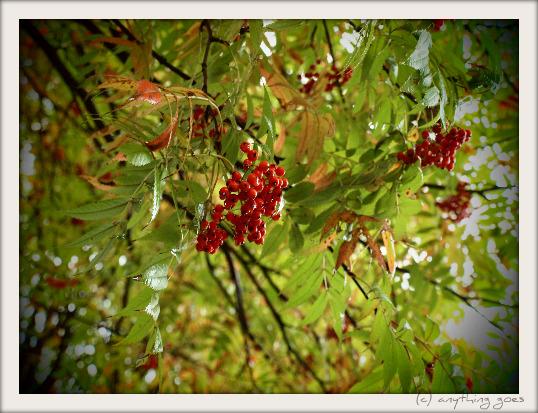 in the rain01