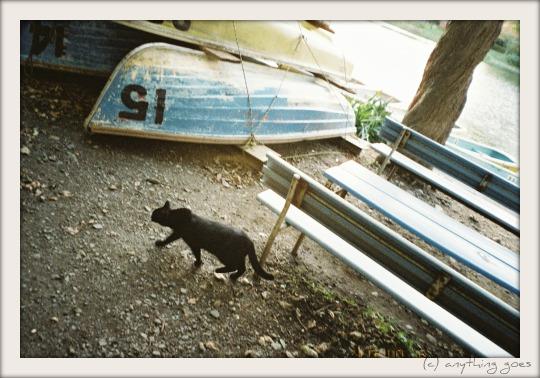 follow the cat03