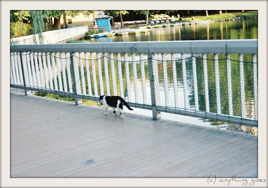 follow the cat01