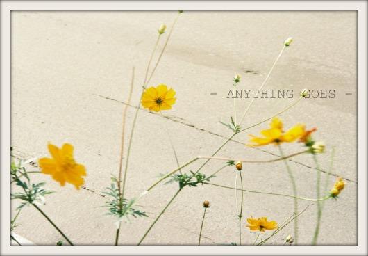 a little autumn03
