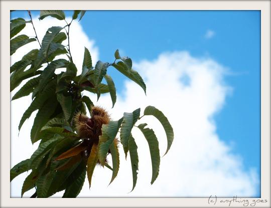 chestnut02.jpg