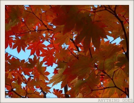 scarlet02.jpg