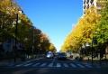 横浜公園から見た光景