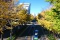 ポーリン橋から見る公孫樹