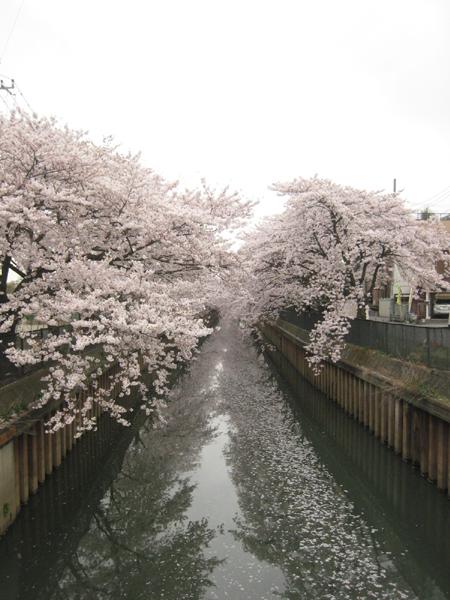 20110409_2.jpg