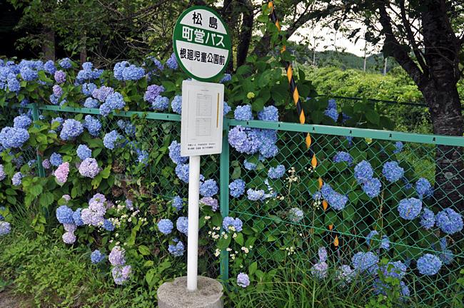 shinainuma19.jpg