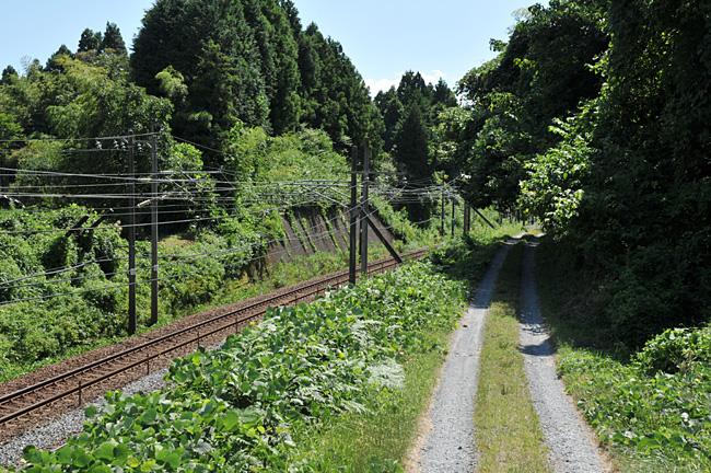 shinainuma21.jpg