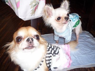ルーちゃん&ジュンちゃん