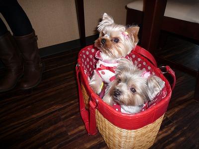 キャンディちゃん&ミミィちゃん in bag