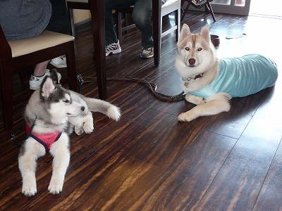 サラちゃん&レナちゃん
