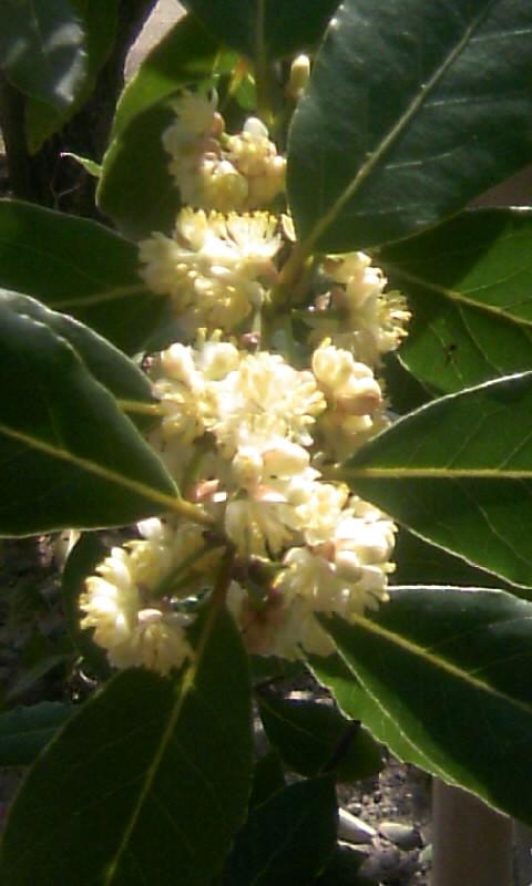 110414_095024檀那寺の花?