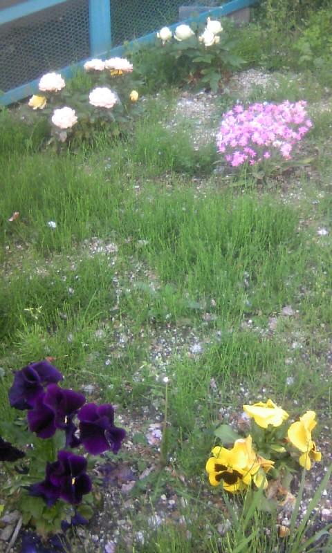 110420_134117アパートの花壇