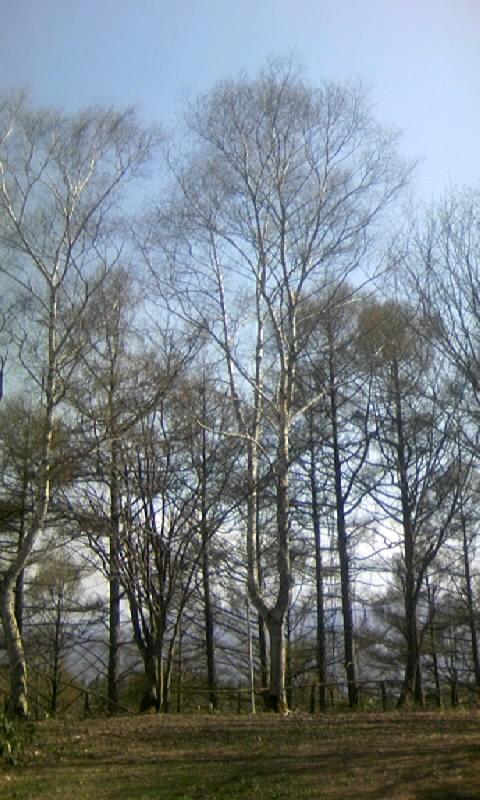 110505_151406山荘の庭