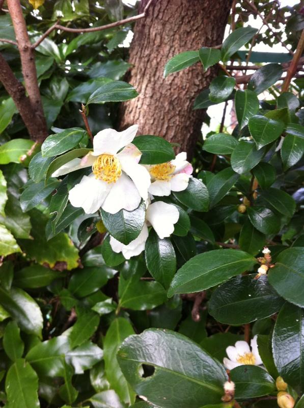 IMG_0480白い花