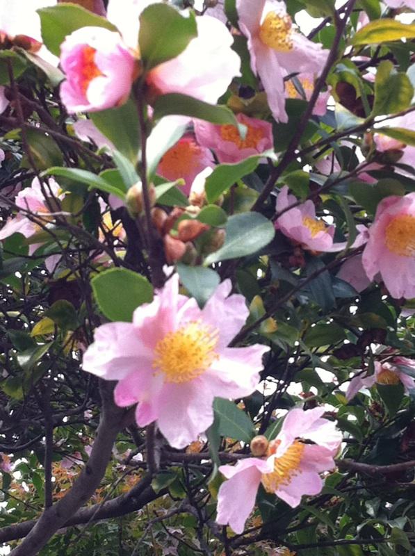 IMG_0929近所の花?