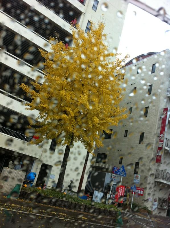 IMG_3233銀杏の黄葉