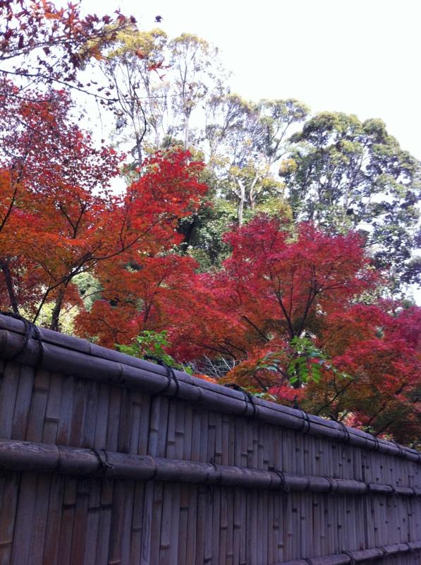 IMG_2992徳川園