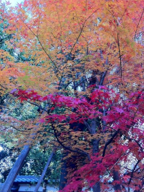 IMG_5190徳川園