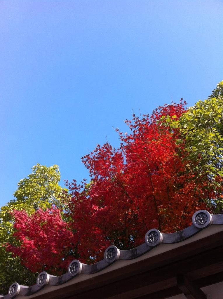 IMG_7369徳川園